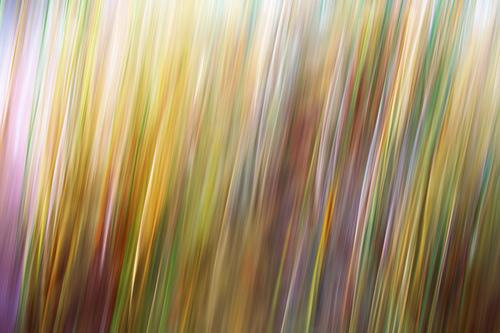 Grass motion blur wallpaper