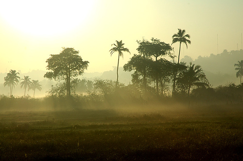 One Misty Morning In Goa