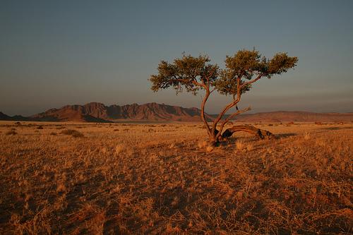 Sossusvlei Region Landscape