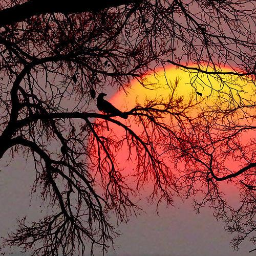The Bird And The Sun
