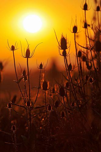Sunset And Plants II