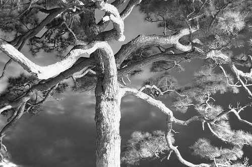 B&W Branches