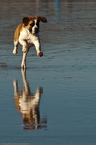 Dog Running On The Wet Sand