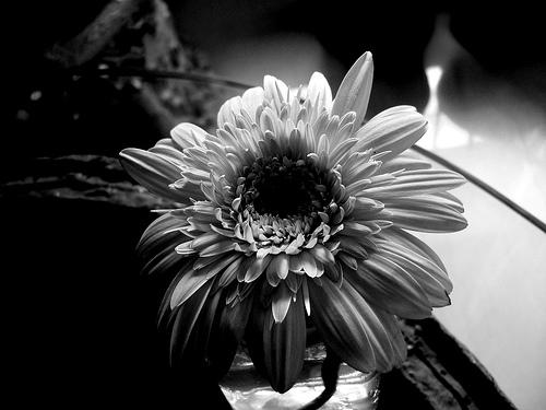 Shot Of The Flower
