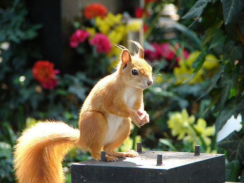 Tombstone Squirrel