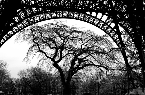 Tree Under The Arch Of Eiffel Tower