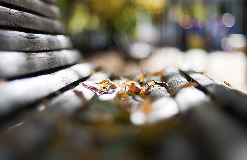 Bokeh Vs DOF — The Difference Between The Two | APN ...