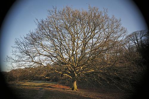 Vignette Effect On Trees On Hampstead Healthq