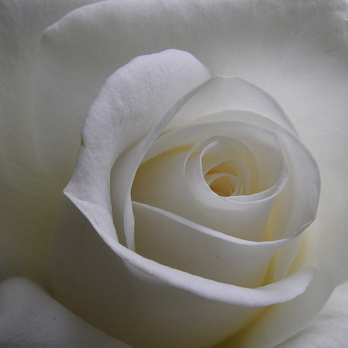 Blanche White