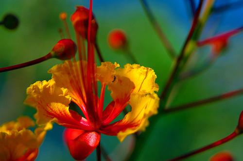 Flower In Front Yard