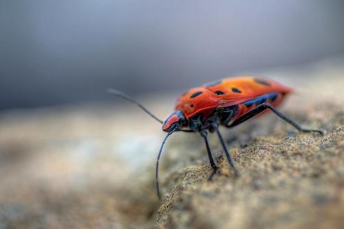 HDR - Beetle