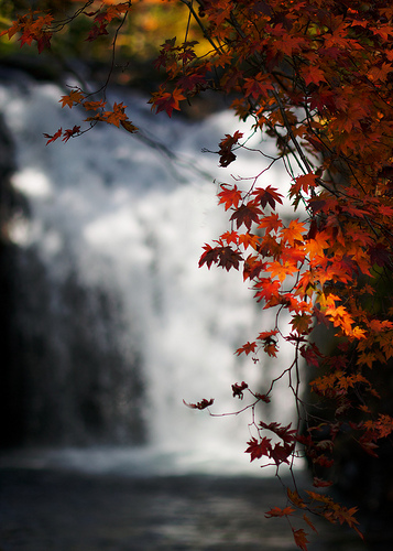 Fall Leaves Fall Waterfall