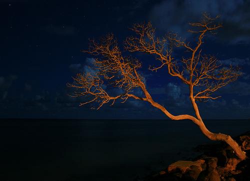 Oahu At Night