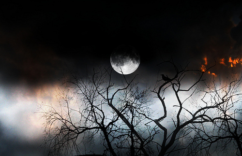 The Bird And The Moon