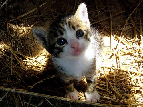 Cute Pet Photographs 33 Cutest Pics Apn Photography