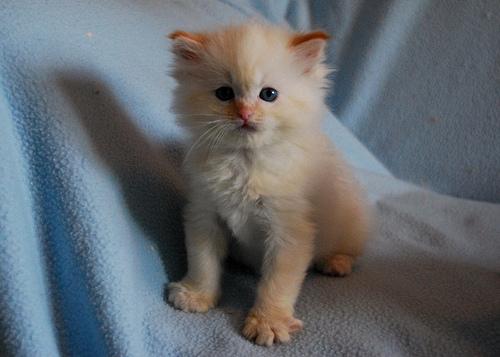 Cute Pet