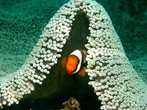 Underwater Natural Frame