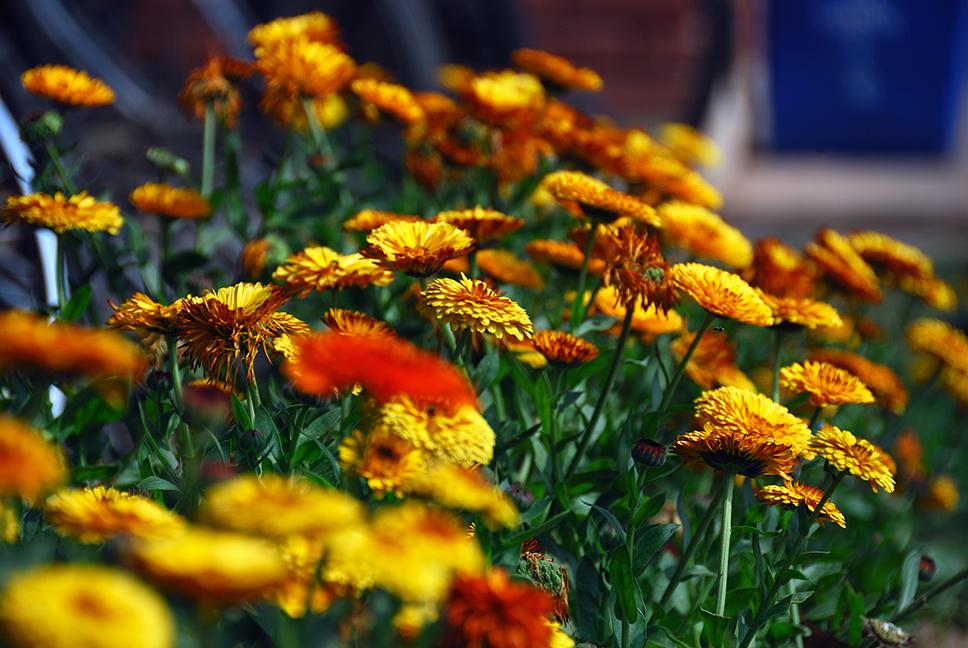 APN Assignment — Beautiful Flower Photographs