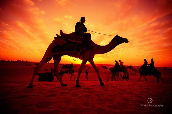 photorgaph captured on Rajasthan trip
